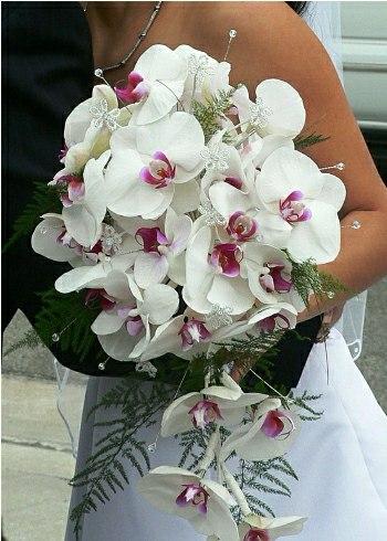 beyaz orkideli gelin çiçegi