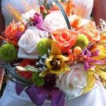 rengarek çiçekli gelin çiçeği